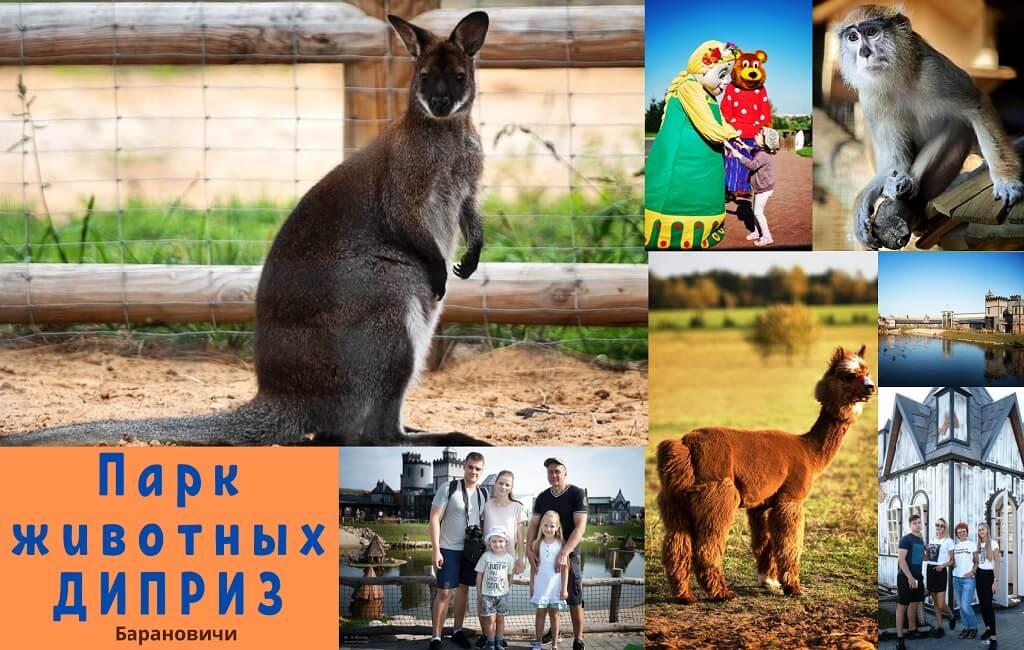 Парк животных Диприз Барановичи